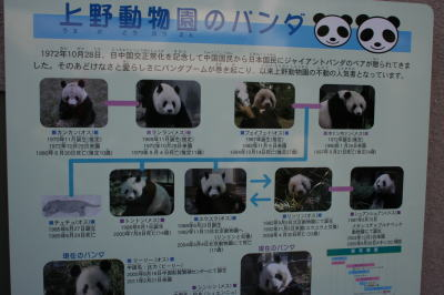 上野動物園パンダ家系図画像