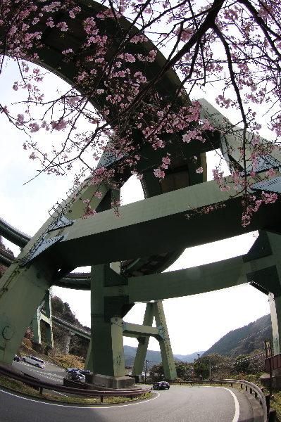 河津七滝ループ橋画像