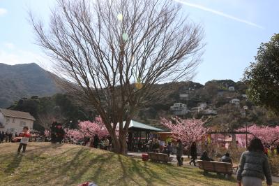 伊豆の河津桜画像