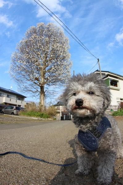 千葉県のペットホテルお預かり中画像