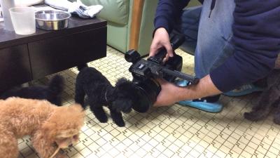 子犬達のTVカメラ撮影画像
