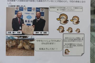 アイガモ(合鴨)農法放鳥式画像