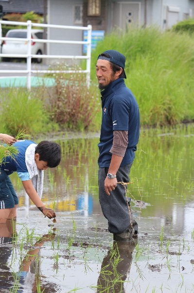 長生村アイガモ農法田植え体験画像