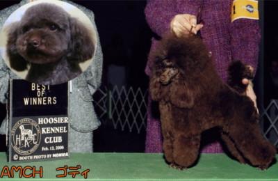 トイプードルの交配で種オスを探したい、レッド、ブラックといった希望があるなら【A HAPPY DOG LIFE】へ