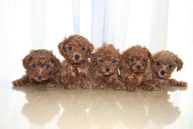 子犬という新しい家族のためにもペット保険を