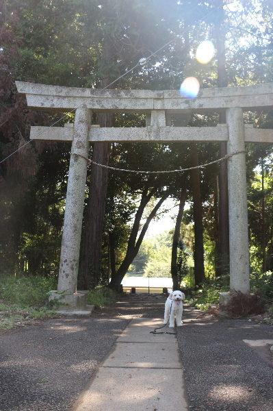 格安,でお預かり中の様子が分かる評判の良い千葉県鎌ヶ谷市のペットホテル,画像