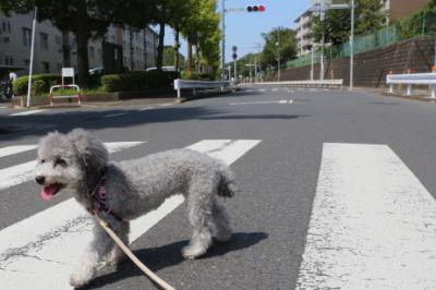 格安でお預かり中の様子が分かる評判の良い千葉県鎌ヶ谷市のペットホテル,画像