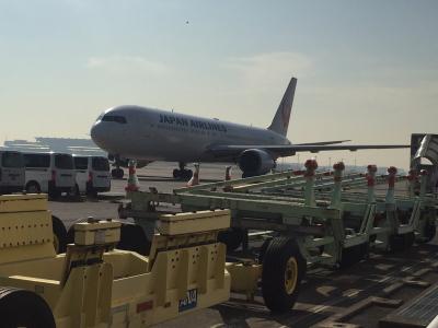 羽田空港JAL画像