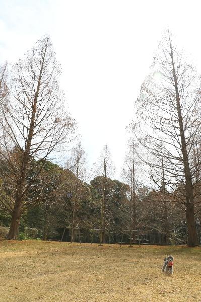 ペットホテルin千葉県、トイプードルクローイちゃんfrom印西市画像