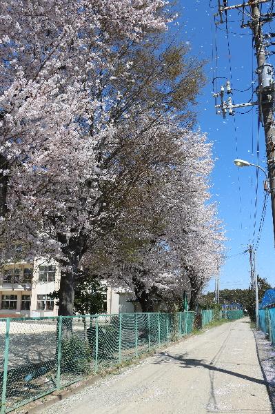 鎌ヶ谷市立南部小学校画像