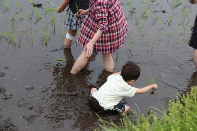 田植え体験:アイガモ(合鴨)農法放鳥式in千葉県長生村2018春画像