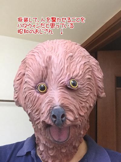 ハロウィン仮装ブリーダー画像