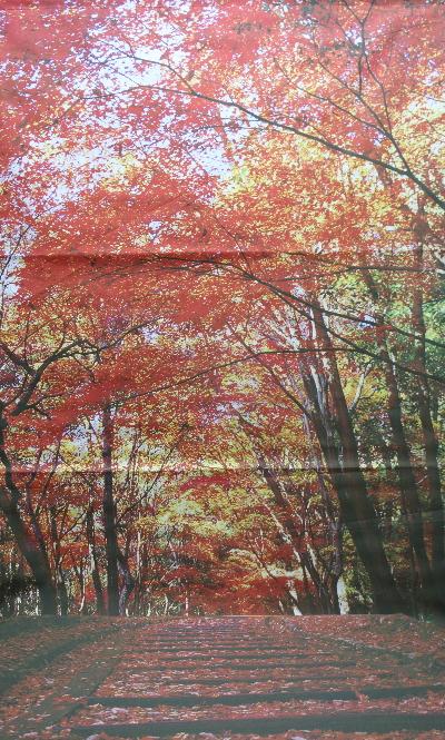 千葉県のトリミングサロン背景画像