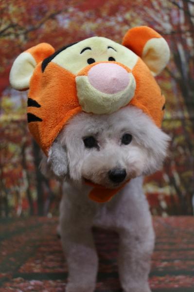 ティガー、犬の被り物、トリミング画像