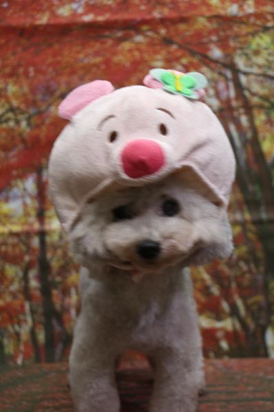 ピグレット、犬の被り物、トリミング画像