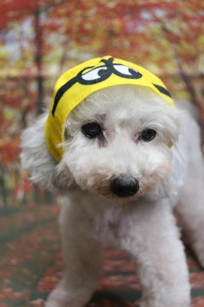 ミニオン、犬の被り物、トリミング画像