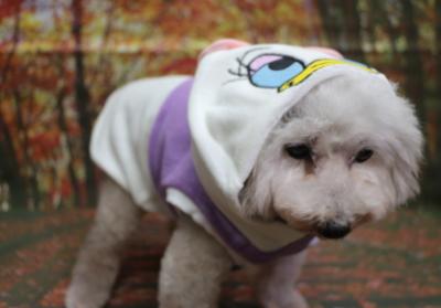デイジー、犬の被り物、トリミング画像