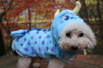 サリー、犬の被り物、トリミング画像