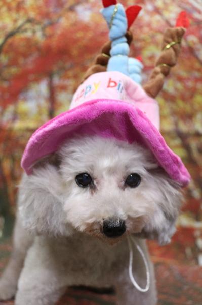 誕生日、犬の被り物、トリミング画像