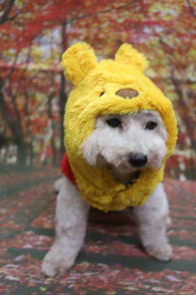 プーさん、犬の被り物、トリミング画像