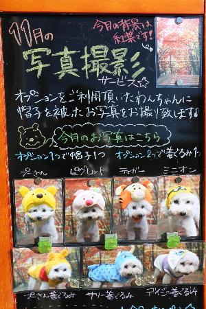 千葉県鎌ヶ谷船橋市のトリミングサロン画像