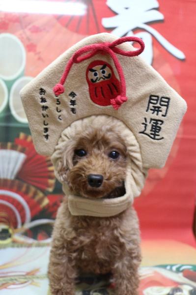 千葉県船橋市鎌ヶ谷市のトリミングサロン、トリミング写真撮影サービス被り物画像