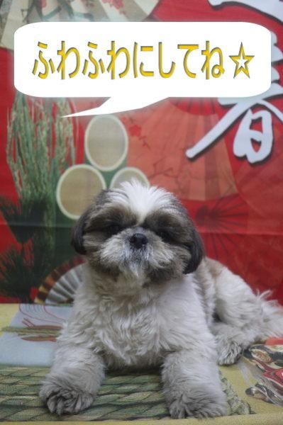千葉県市川市のシーズートリミング前画像