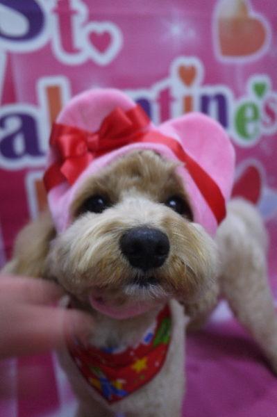 千葉県市川市のミックス犬トリミング画像
