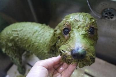 千葉県市川市のミックス犬ハーブパック画像