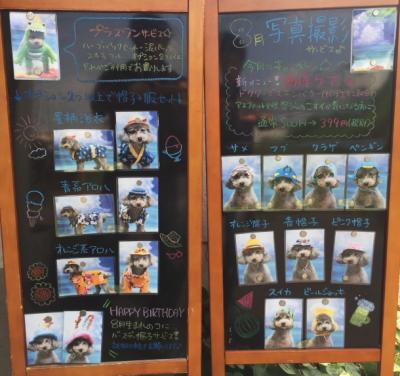 トリミングサロン、トリマー、千葉県鎌ヶ谷市船橋市市川市、撮影サービス画像