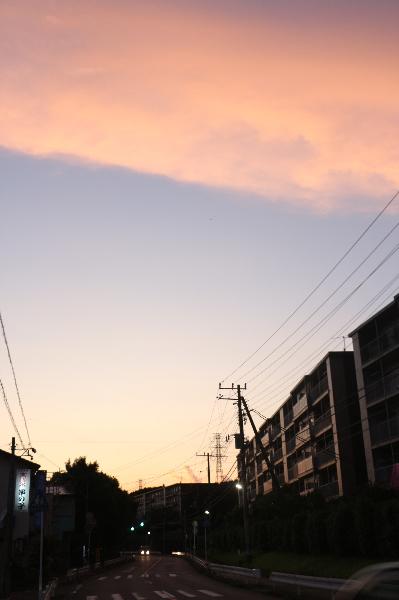 ペットホテル、千葉県市川市トイプードルジンジャー君画像