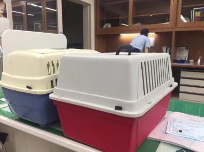犬を連れて韓国へPart2画像