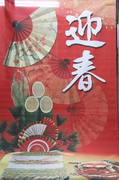 千葉県鎌ヶ谷市船橋市市川市のトリミングサロン、撮影サービス画像