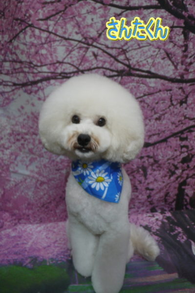 千葉県松戸市のミックス犬のトリミング画像