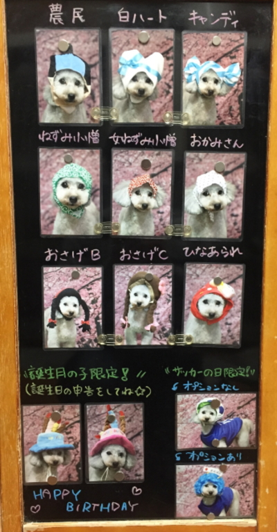 千葉県船橋市鎌ヶ谷市市川市のトリミングサロン、被り物サービス画像