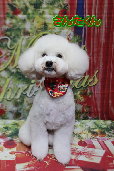 千葉県松戸市のミックス犬のトリミング前画像