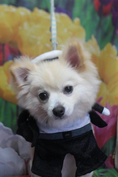 千葉県船橋市のミックス犬のトリミング像