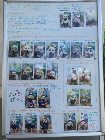 トリミングサロン、トリマー、千葉県船橋市鎌ヶ谷市市川市柏市、写真撮影サービス画像